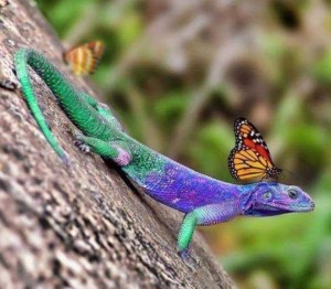 cameleon with Butterfly